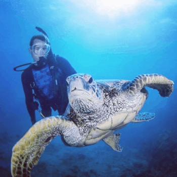 scuba diving in Arraial do Cabo