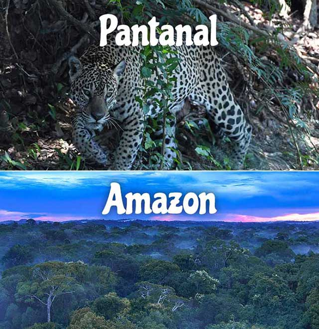 Pantanal & Amazon Adventure Package