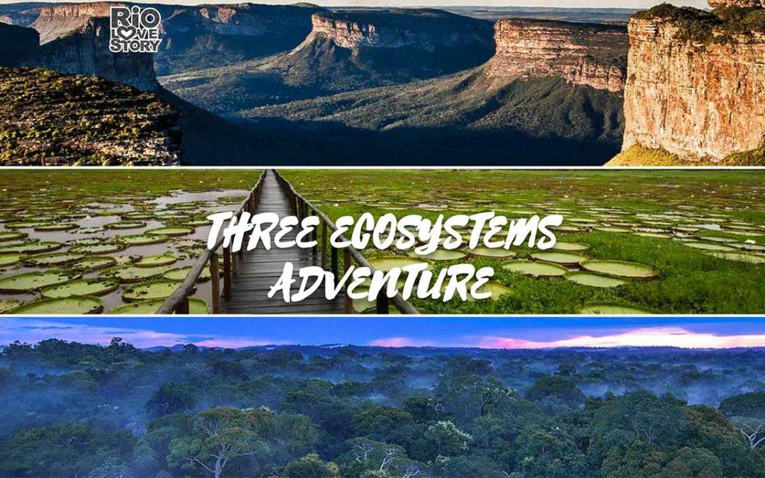 3 Ecosystems
